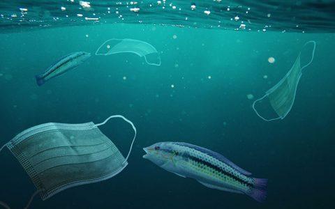 Journée mondiale de l'océan : retour sur l'impact du COVID19 sur nos océans