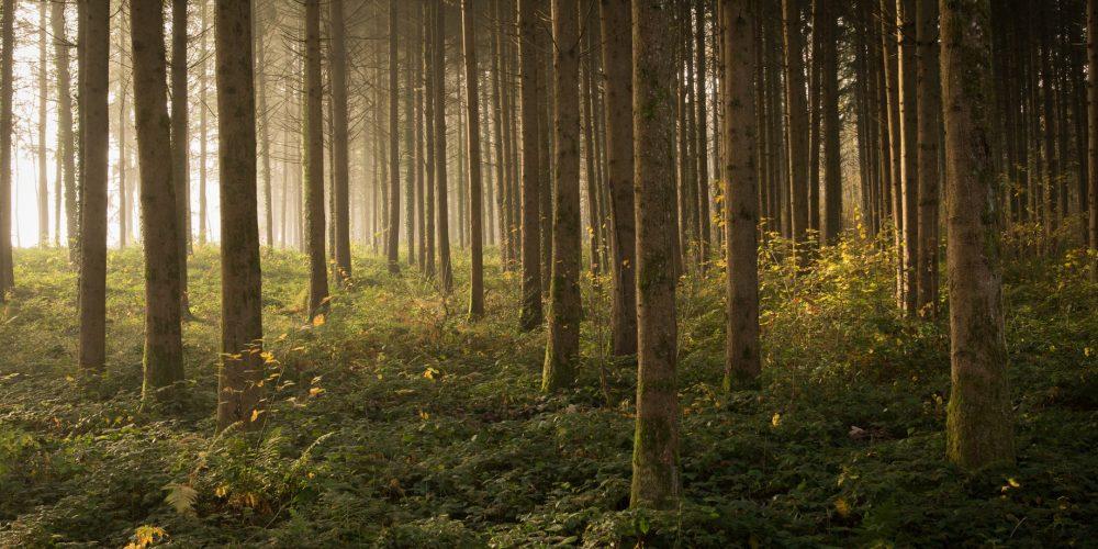 La Fondation Maisons du Monde lance « Aux arbres », 2 jours pour s'engager pour les forêts et la biodiversité