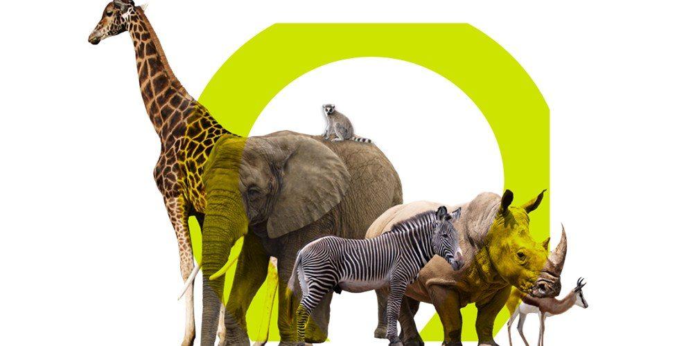 The Lion's Share Fund : préserver la biodiversité grâce au soutien publicitaire des grandes marques