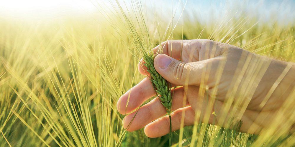 CultivUp, la démarche client d'Axéréal certifiée Agriculture Durable